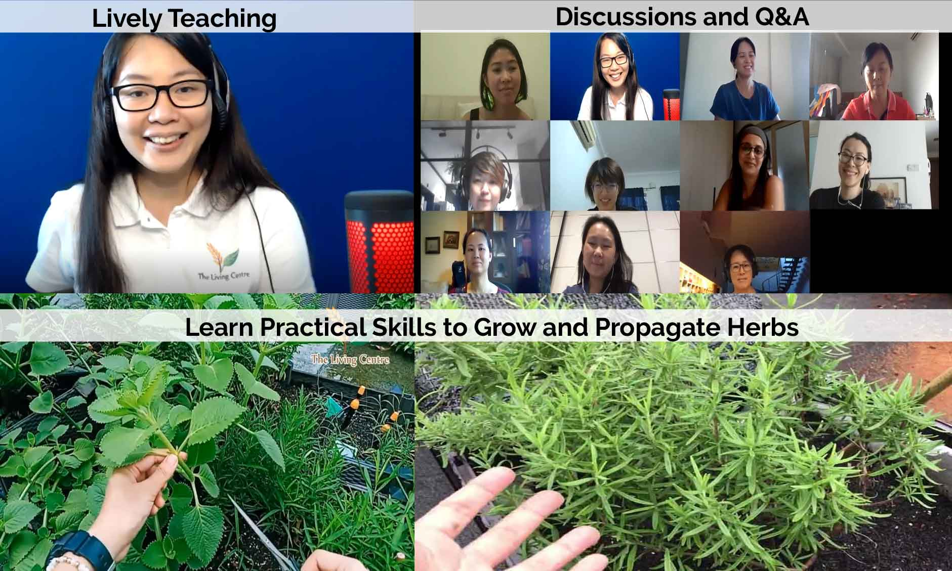 Grow Herbs Course Online Singapore