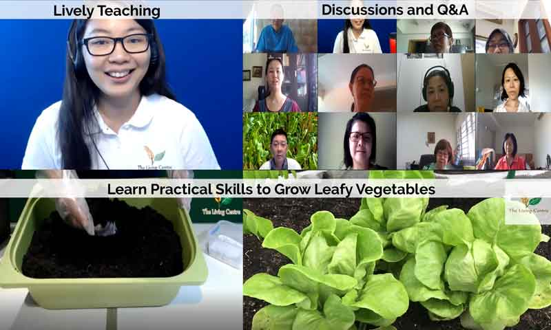 Grow Vegetables Singapore Course Online