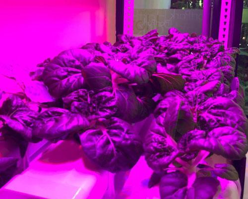 HighTechIndoorFarming TheLivingCentre
