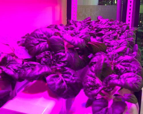 High Tech Farming Singapore