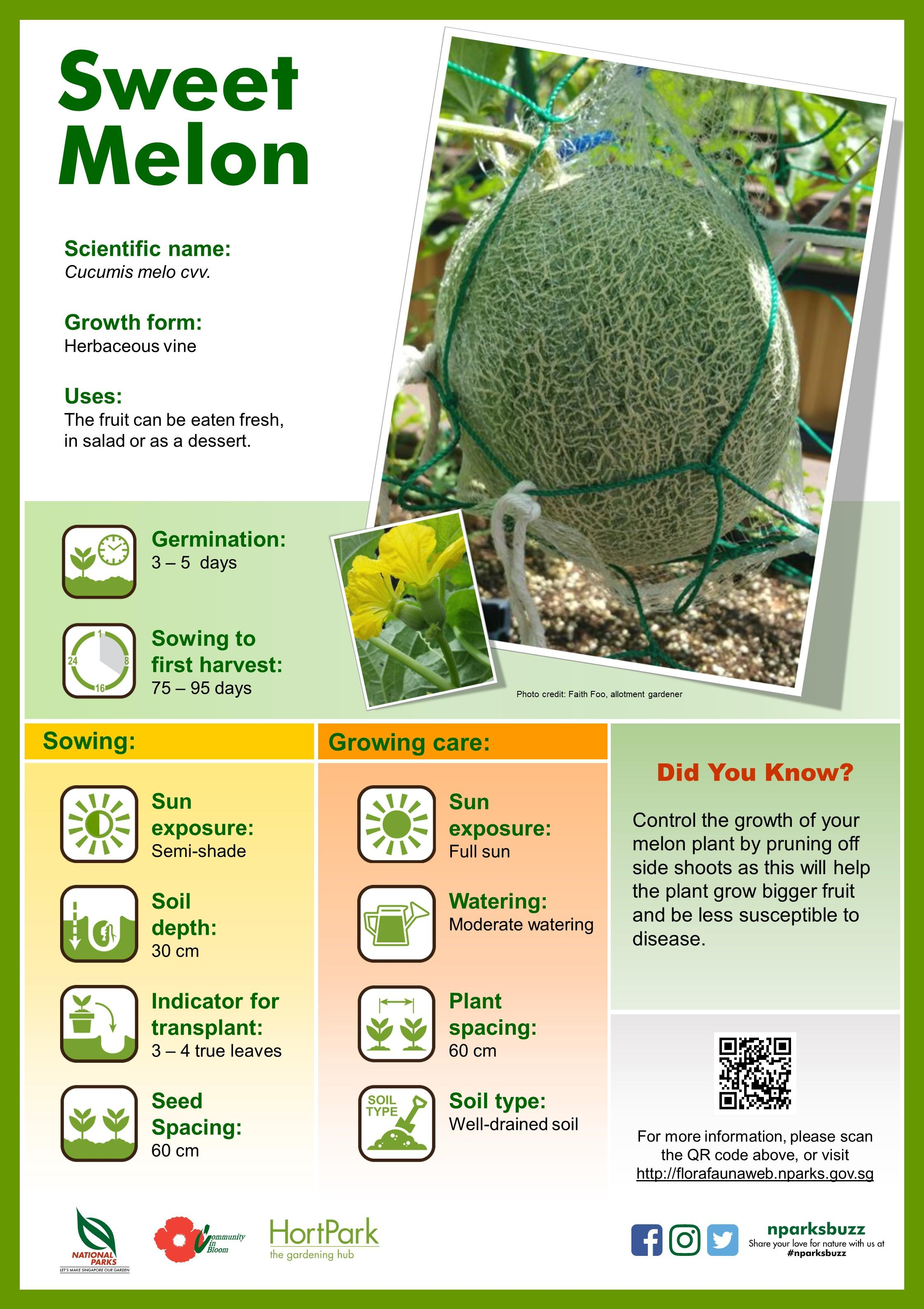 Plant Info Board Sweet Melon TLC