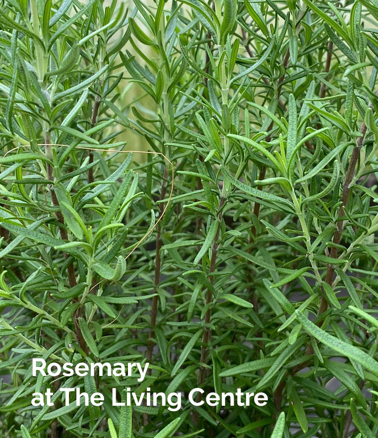 Rosemary TheLivingCentre