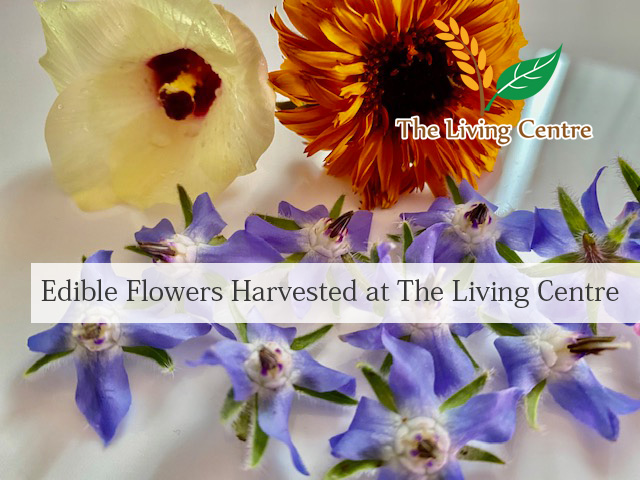 TheLivingCentre EdibleFlowers2