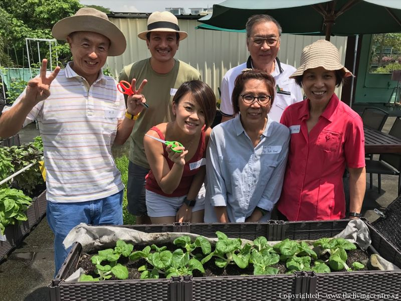 1 Day Course on Grow Leafy Vegetables Successfully in