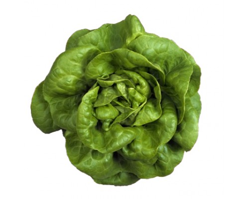 Butterhead Lettuce Seeds