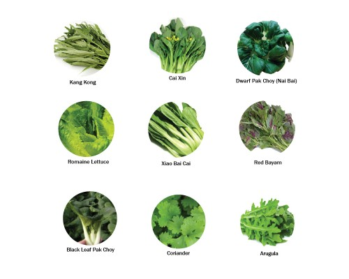 Start Your Own Edible Garden Seeds Package (9 Types of Vegetables Herbs Seeds)